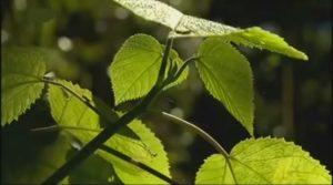 se-soigner-avec-les-plantes