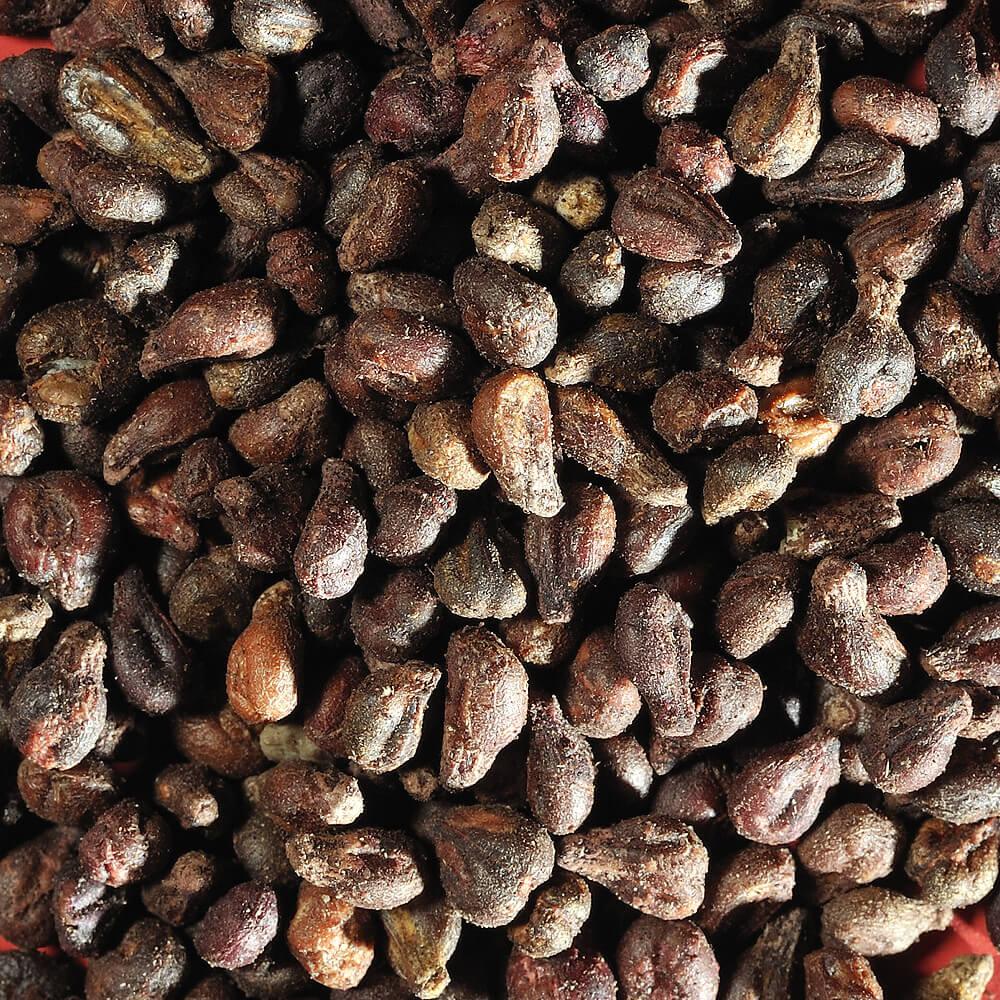 L'extrait de pépins de raisin, une source de santé